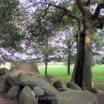 Hunnebedboom Midlaren