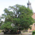 Robinia kasteel Doorwerth