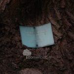 Japanse honingboom 'Harrie van Haaren'