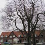 Hemelboom Zutphen