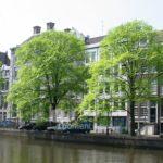 Hollandse iep 'Belgica'