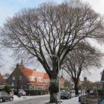 Pluimiep Leeuwarden